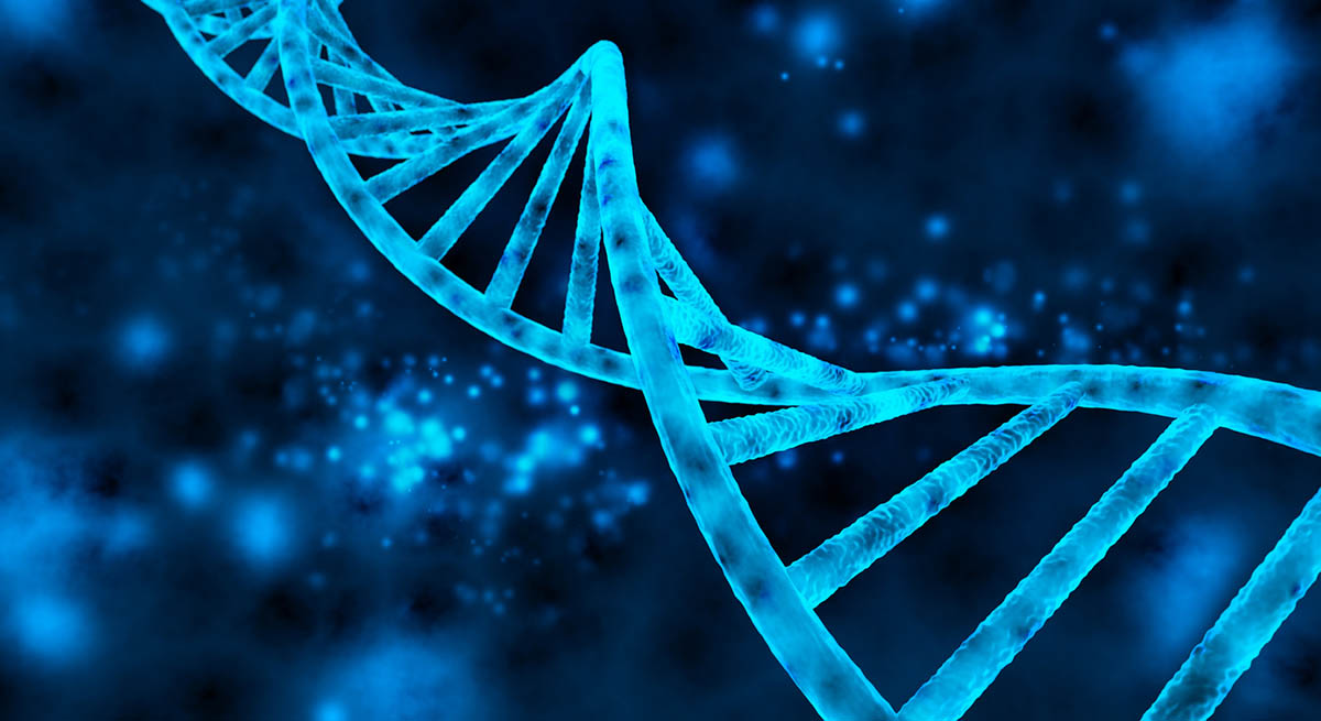 Double helix of the DNA